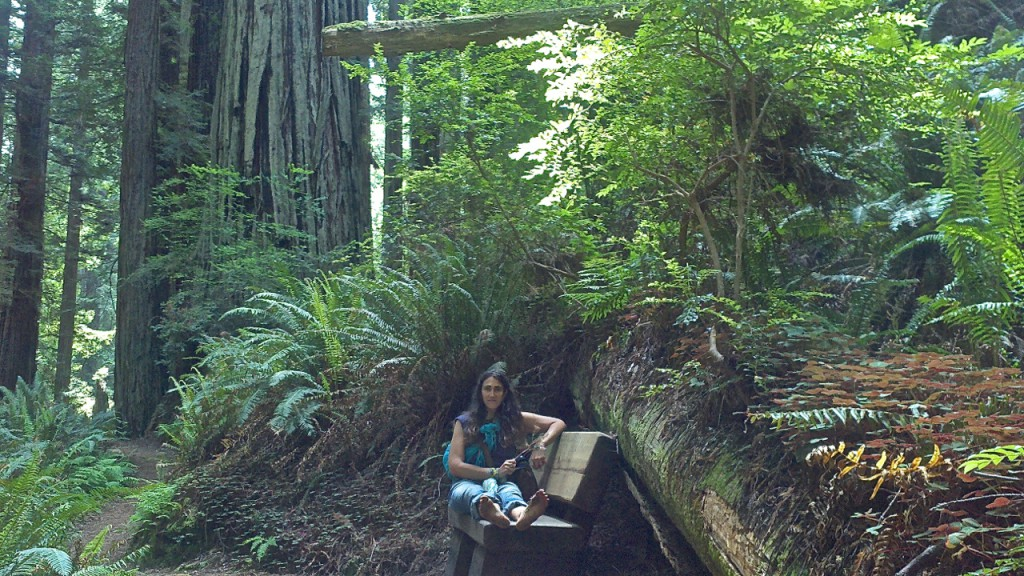 redwoods2015june